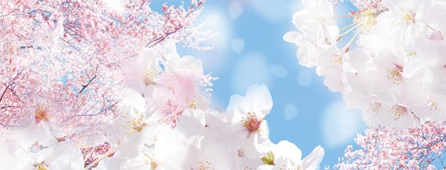 春といえば桜の季節