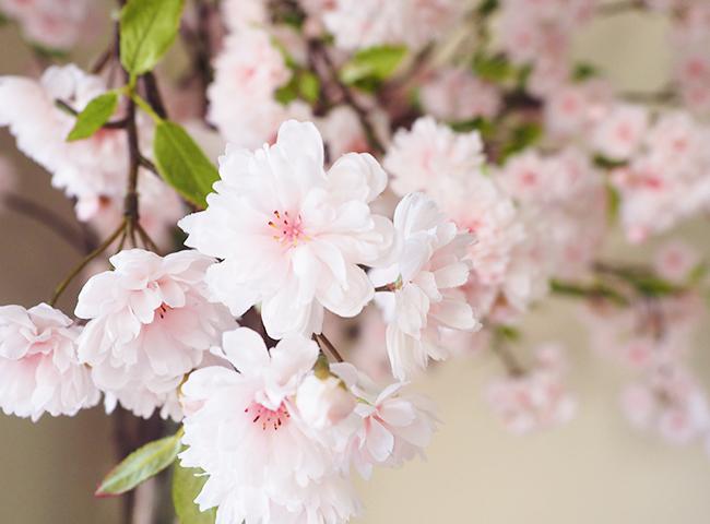 アートフラワーの八重桜