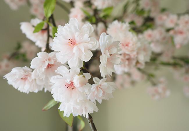 八重桜のアートフラワー