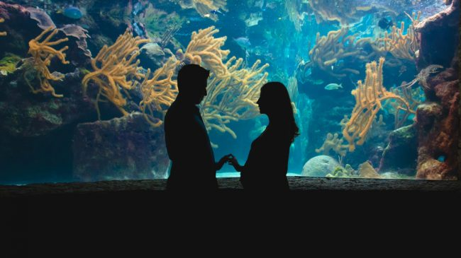 水族館 カップル