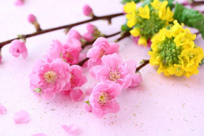 ひな祭りの花