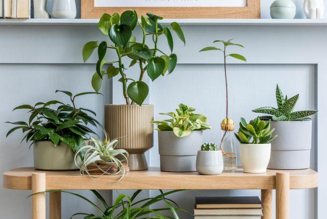 観葉植物をお部屋に